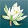 Læs mere om: Dansk flora udkommer i 2. udgave