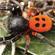 Læs mere om: Velvet Spiders Emerge from Underground