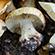Læs mere om: Ny svampeart opdaget ved Kolding