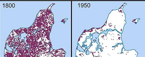 Tilbagegang af heden siden 1800, lyngløberens primære habitat. Det må forventes, at tilbagegangen er endnu større i dag, end det som fremgår af kortet fra 1950.