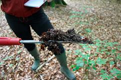 Feltarbejde i Allindelille Fredskov, hvor der tages jordprøver til DNA-sekvensering. Foto Morten Remar