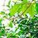 Læs mere om: 20 sjældne figentræer til Botanisk Have