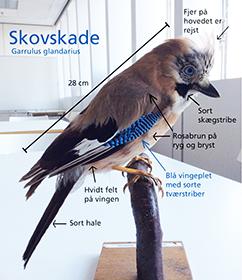 Sådan skan BESKRIV VERDEN eksempelvis buges. Beskrivelse af skovskade. Foto: Katrine Vibeke Minddal.
