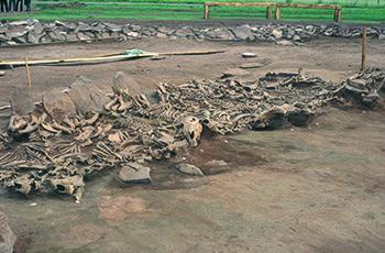 Scytiske Kurgan Arzhan 2 (Tuva, Sibirien), 7. århundrede f. Kr. Grav 16 med udsigt over 14 udgravede hesteskeletter. (Copyright: Michael Hochmuth, German Archaeological Institute, Berlin).