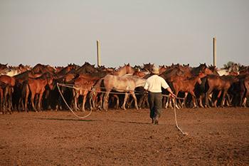 Kazakh hesteavler, der indfanger heste i det nordlige Centralkazakhstan. (Copyright: Ludovic Orlando, Statens Naturhistoriske Museum og CNRS).
