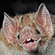 Læs mere om: Ny DNA-screening afslører hvis blod vampyrflagermusen drikker