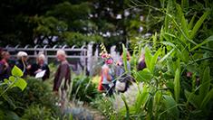 Billede af rundvisninger i botanisk have