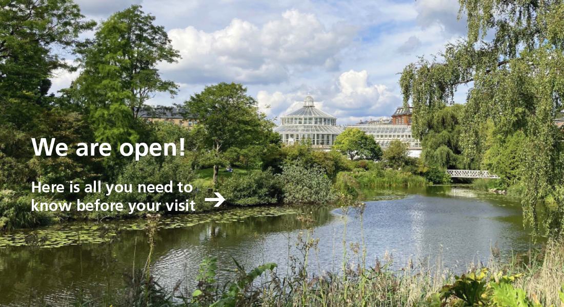 The museums incl. the Botanical Garden are reopen