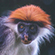 Read more about: Africa's secret rainforests revealed in new book