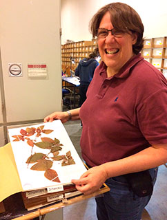 After years of searching in herbaria across South America for the rare Shenkea blumenaviana, Helga Ochoterena from The National Herbarium of Mexico finds a specimen in the collections of the herbarium of the Natural History Museum of Denmark. Even more excitingly, it turned out that this collection originated from the museum's Botanical Gardens in Copenhagen, which in addition to this species includes many rare plants, and thereby constitute an important research collection.