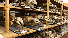 Picture of whale skeletons