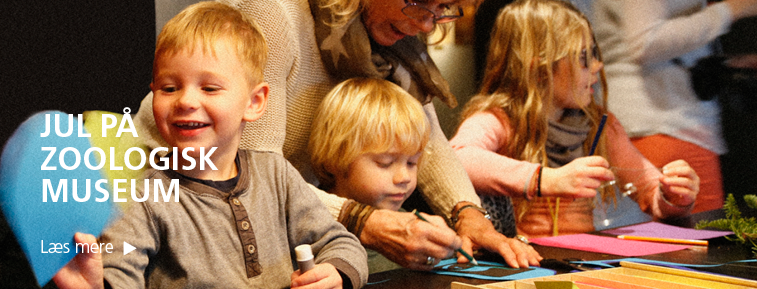 Aktivitetsprogram i julen på Zoologisk Museum