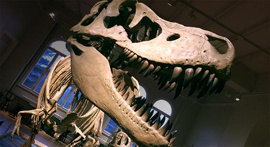 Dinosaurfamilier