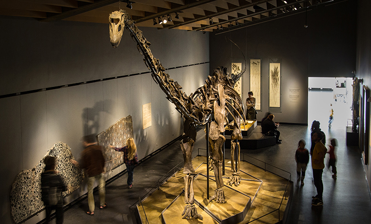 Picture of a dinosaur in the exhibition precious things