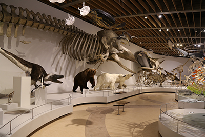 Picture of the exhibit Evolution