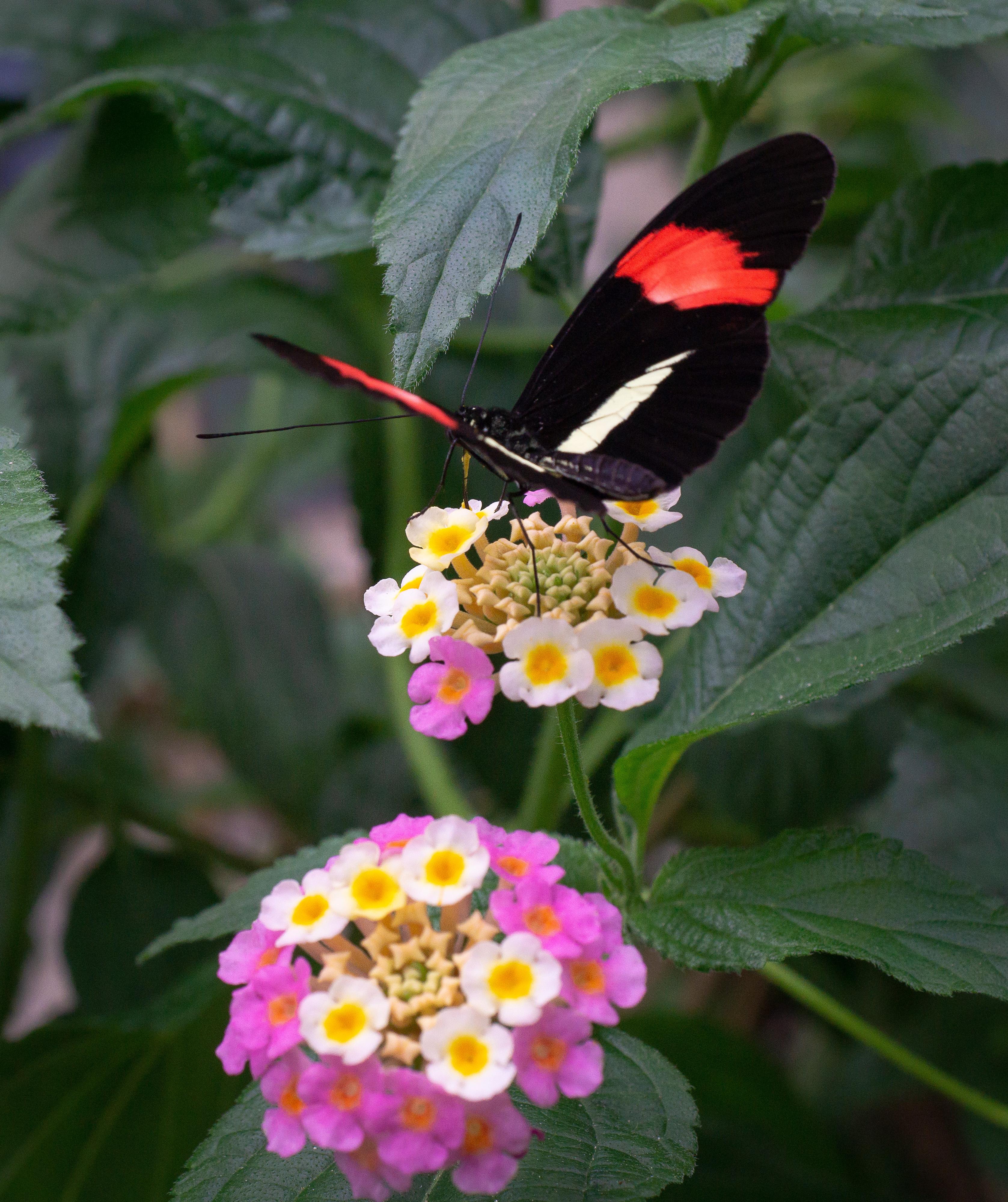 butterfly copenhagen